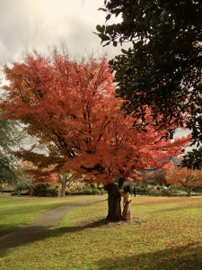 Fall in Rotorua